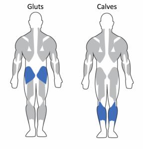 Glutes-Calves-982x1024