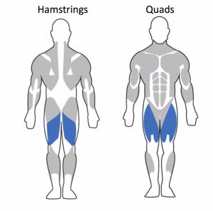 Hamstrings-Quads-1024x1012