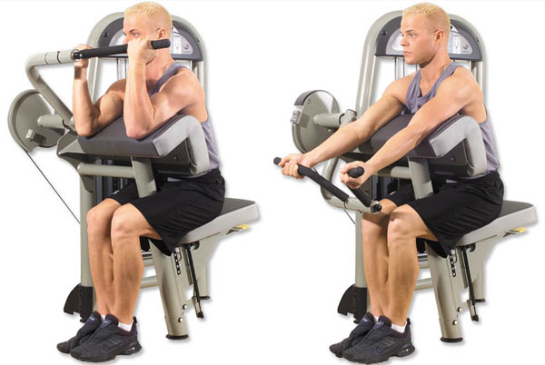 bicep machine curl