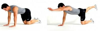 http://www.gymbeginner.hk/wp-content/uploads/2014/10/bird-dog-exercise-basic-1-e1413679337219.jpg