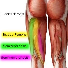 hamstrings (1)