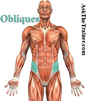 obliques-exercise-videos