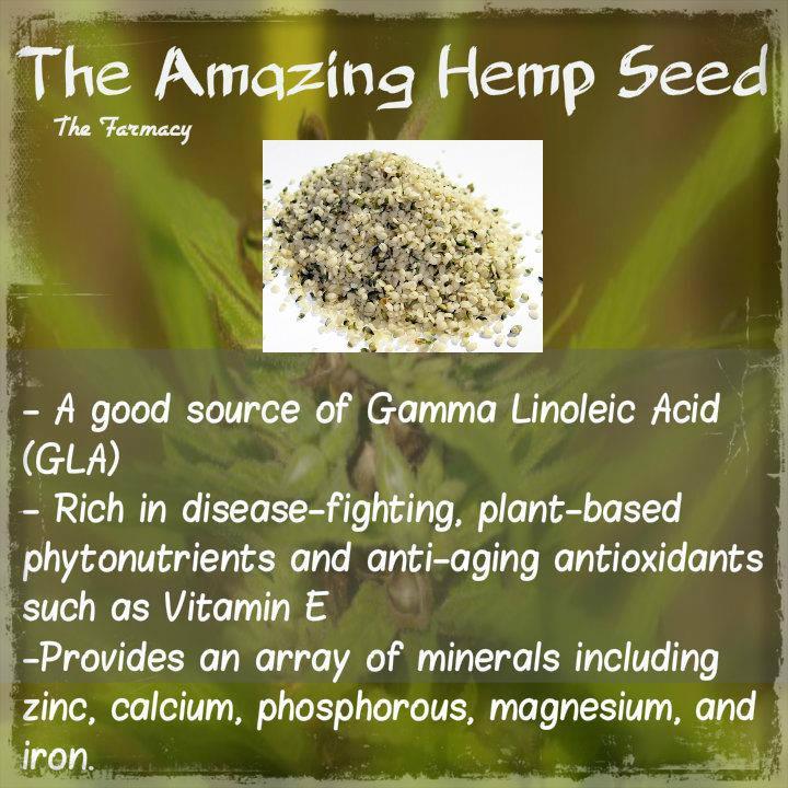 hemp-seed-the-amazing-hemp-seed