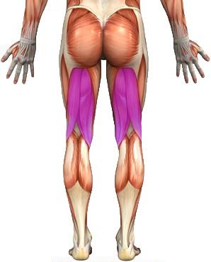 hamstrings-exercise