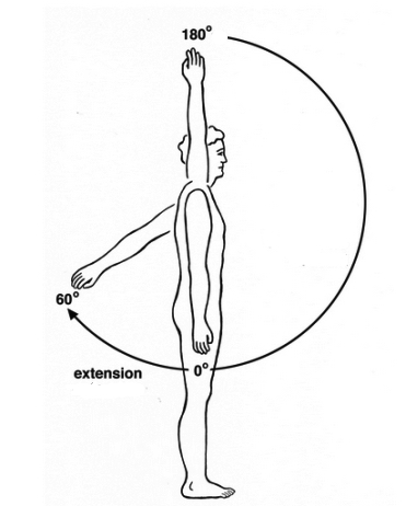 shoulder-flexion-and-extension